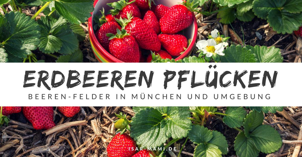 Marmeladenzeit in München Erdbeerfelder