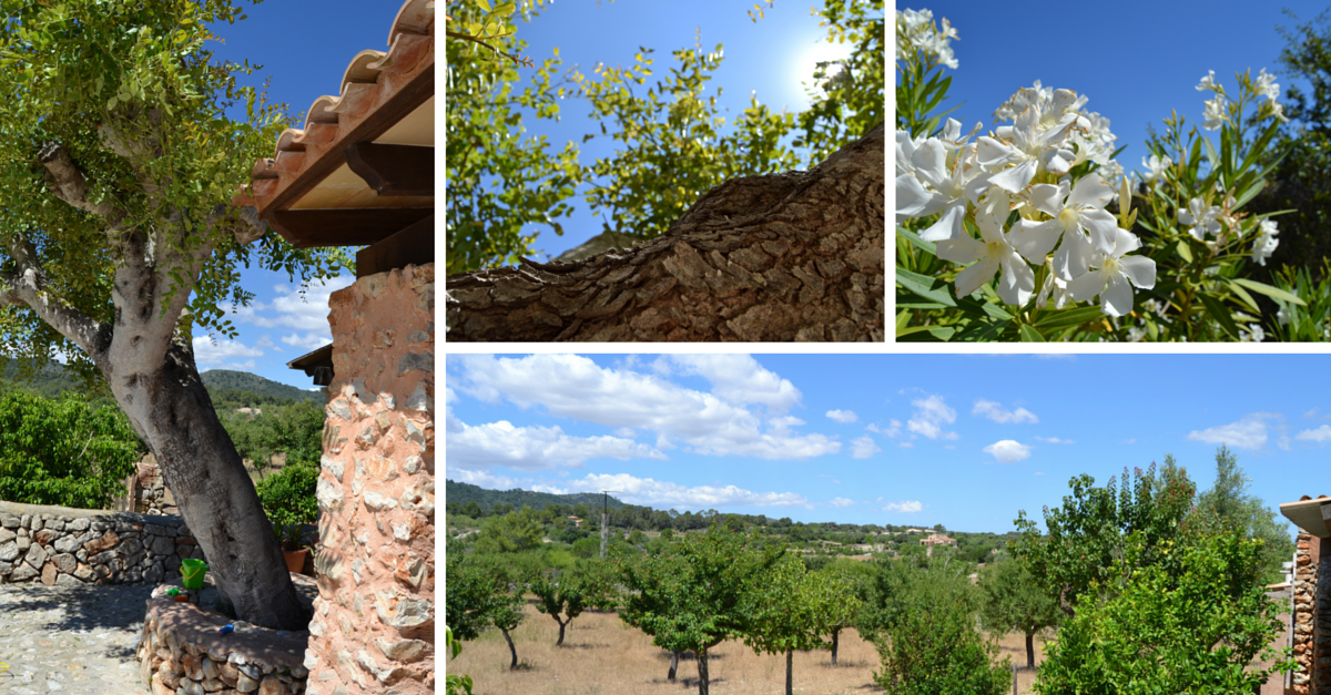 Fincaurlaub Mallorca Manacor Osten Ferienhaus mit Pool