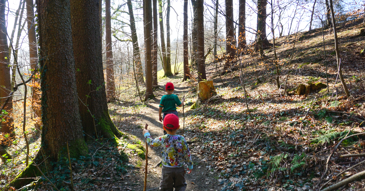 Wanderung Ratzinger Hoehe Wald