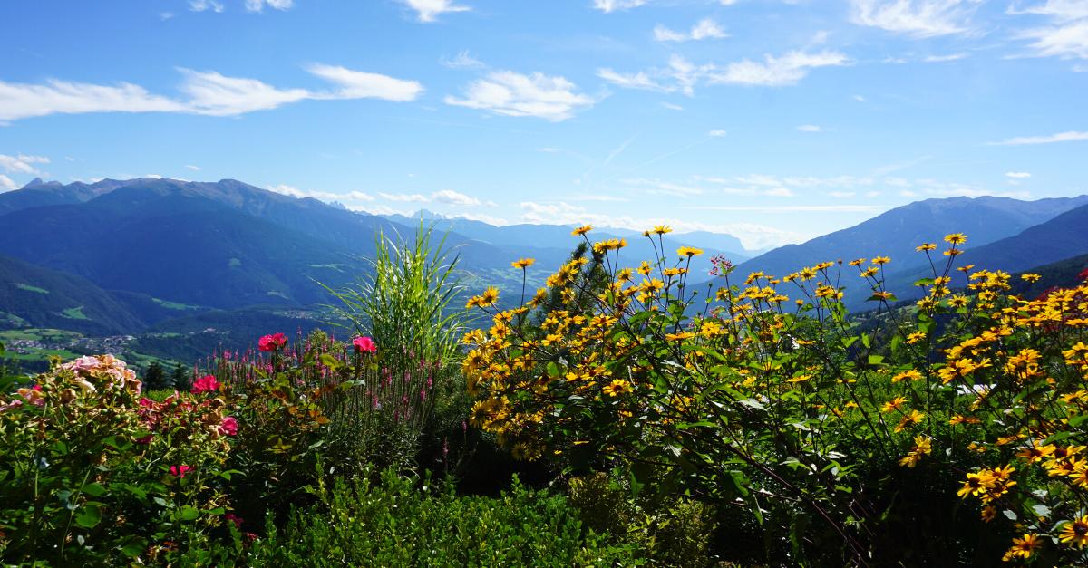 Alpenhof Panorama