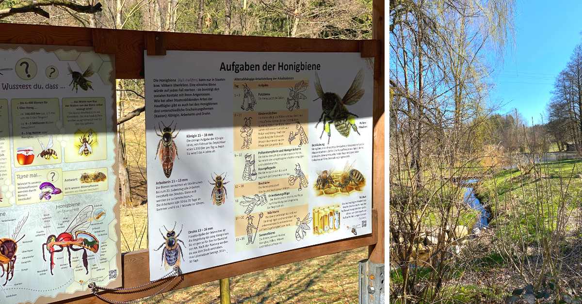 Lehrpfad Bienen Kleinhöhenrain